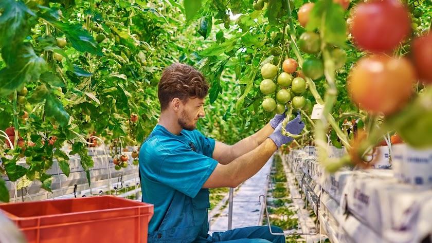 Salen a concurso las nuevas ayudas a jóvenes agricultores