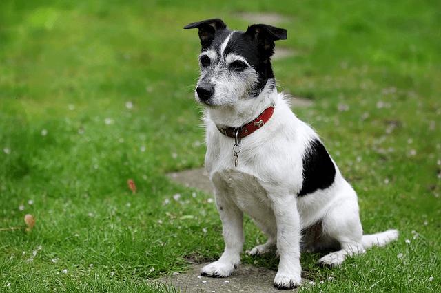 Différentes méthodes existent pour apprendre à son chien assis. En fait il en existe 3 commençons par la méthode passive. Voici comment faire ....