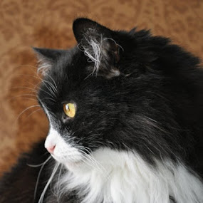 by Rosita Ramner - Animals - Cats Portraits (  )
