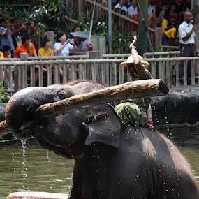 Elephant Show by Kai Jian - News & Events World Events