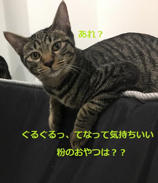 猫のおやつのおすすめ人気3選&猫が喜ぶ上手な上げ方と注意点
