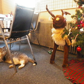 Cat with Rudolph by Stephen Deckk - Animals - Cats Playing
