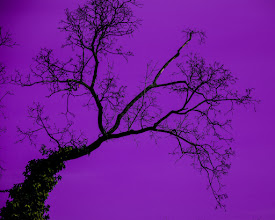 Photo: The skies are pinker on the other side of the tree?