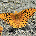 Painted Fritillary