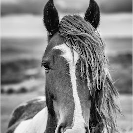 by David Bevan - Animals Horses