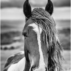 by David Bevan - Animals Horses