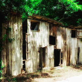 Work Shed by Dave Walters - Buildings & Architecture Decaying & Abandoned ( nature, architectural detail, lumix fz200, state parks, colors, natchez )