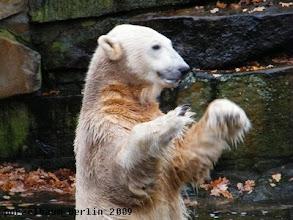 Photo: Knut wartet auf die Fuetterung ;-)