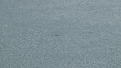 Photo: Isle of Skye - Trotternish - Loutre à Kylerhea