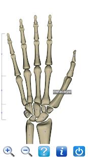 Visual Anatomy Free- screenshot thumbnail