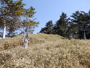 笹の間の踏み跡で山頂へ