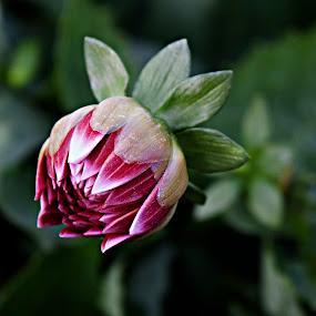 NEW LIFE by Nihan Bayındır - Flowers Flower Buds ( macro, nature, colors, bud, flowers, blossom )