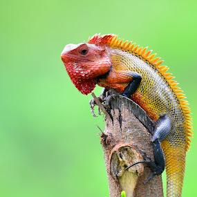 Lizard by Arjun Sadasevam - Animals Reptiles