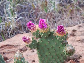Photo: Flower buds