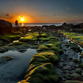 Sunset with green sea moss by David Wong - Landscapes Sunsets & Sunrises ( sunset, moss, seascape, landscape )