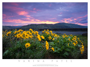 Photo: I Dream in Color  Tom McCall Preserve - Oregon, USA  I love shooting flowers in the wind. When a brilliant splash of gold dances in the wind, a longer shutter speed captures a blur of color. When I have a whole bunch of flowers, the result is like something out of a dream. And on the morning I took this shot, the sky decided to play along. What a perfect morning!