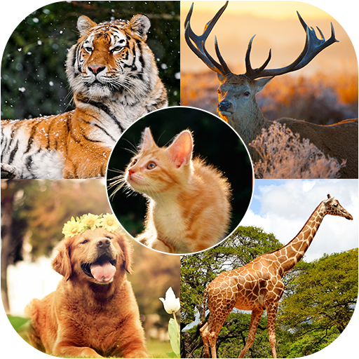 Animals Wallpaper 4K