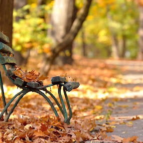 Lonley bench by Ion Alexandra - City,  Street & Park  City Parks ( autumn, quiet, light, old bench,  )