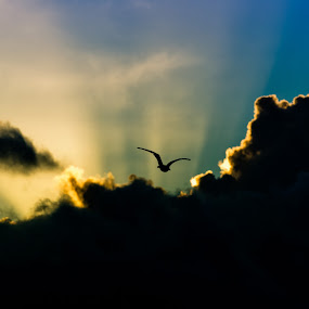 Through the rays by Sergei Pitkevich - Animals Birds
