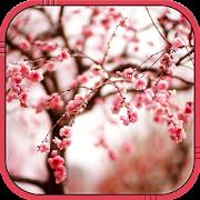 flor cerejeira papel parede
