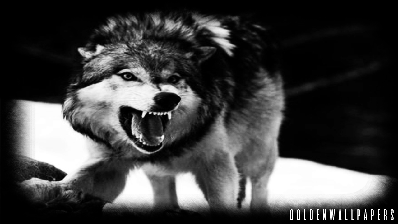 black wolf wallpaper android apps on google play