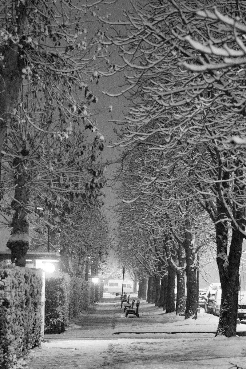 Viale nevoso di saso99saso