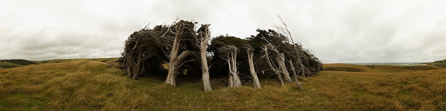 Photo: New Zealand, Southland, Catlins