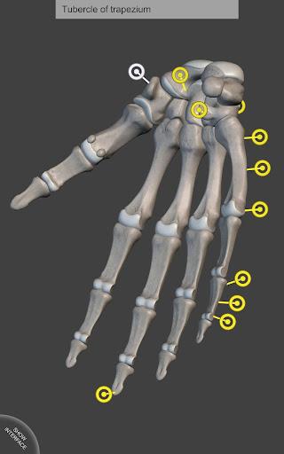 骨骼系统——人体解剖学3D互动图集
