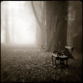Fog I by Sasa Lazic - Landscapes Weather ( canon, fog, art, bw, square, lensbaby, road )