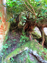 Photo: yes, that's right: just wood here, gnarled and old