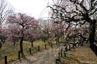 Photo: 加えてここ数年は大阪市の組織改変と大リストラの影響で公園管理事務所の担当職員が激減し、(2014,03,16)