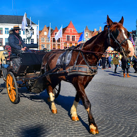 horse and cart by Nic Scott - Transportation Other ( horse, horse and cart, brugge, transport, cart, transportation,  )