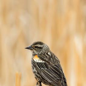 by Chris Greenwood - Animals Birds