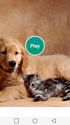 符合条件的狗和猫