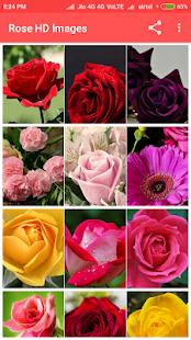 Rose HD Images - náhled