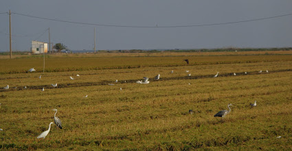 Photo: Herons and egrets