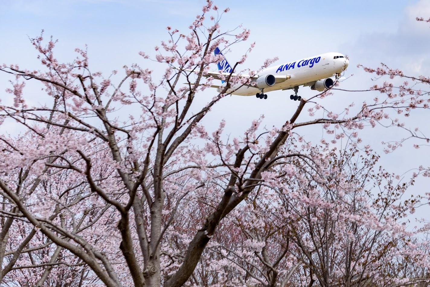 【旅5日目】成田空港近くの「さくらの山公園」で桜と飛行機のコラボを撮影