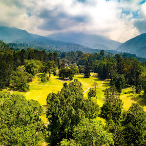 Botanical Gardens by Irfan Firdaus - Landscapes Mountains & Hills ( travel photography, forest, green, nature, indonesia )