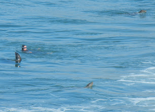 Photo: A swimmer in the water with the seals!