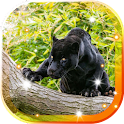 Panther Black Jaguar LWP icon