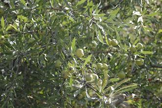 Photo: Apple tree
