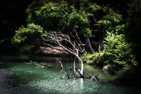 l'albero del fiume di fabio pelosi