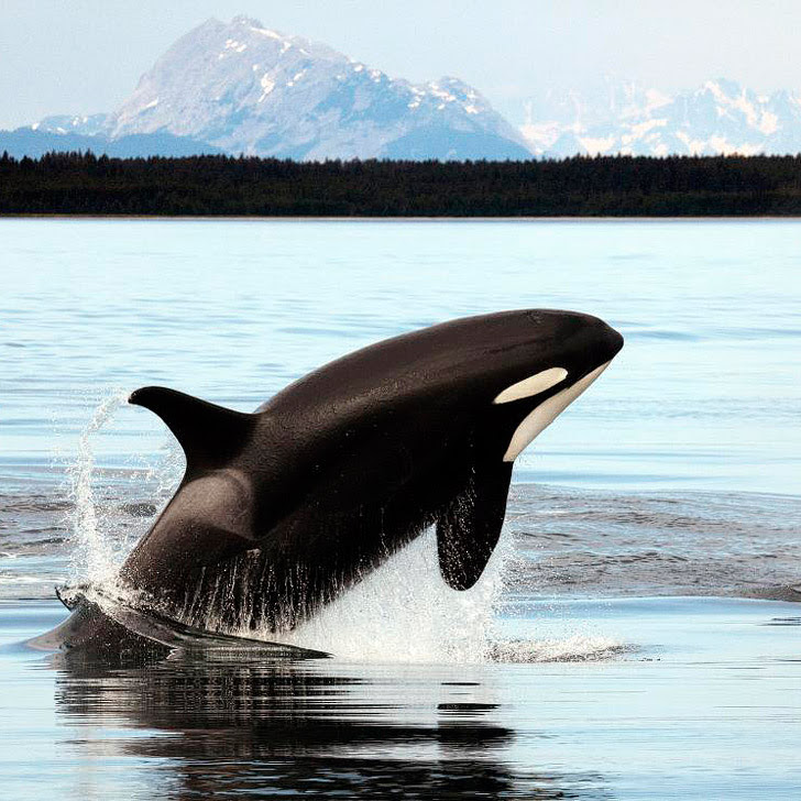 Whale Watching Alaska (15 Best Places to Whale Watch in the US + When to Go).