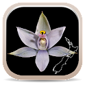 NZ Orchid Key icon
