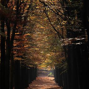 autumn by Hilda van der Lee - Landscapes Forests ( autumn, forest, landscape, beech, lane,  )