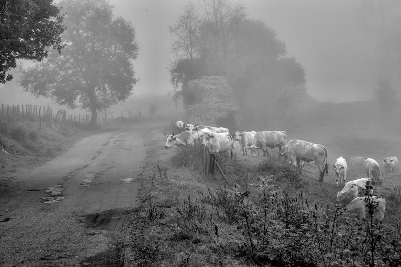 La strada in campagna di si