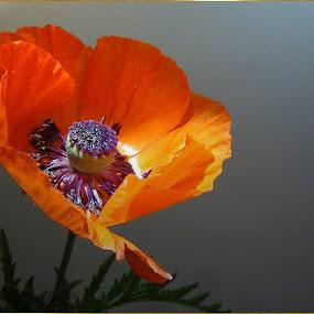 In the Limelight . . . by Ilona Stefan - Flowers Single Flower