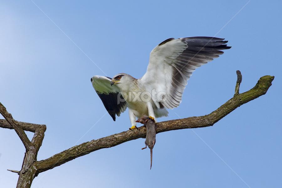 by Ken Goh - Animals Birds (  )