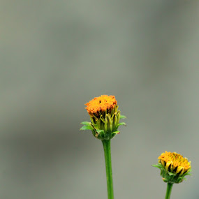 the little twin by Wibi Prayogo - Nature Up Close Flowers - 2011-2013