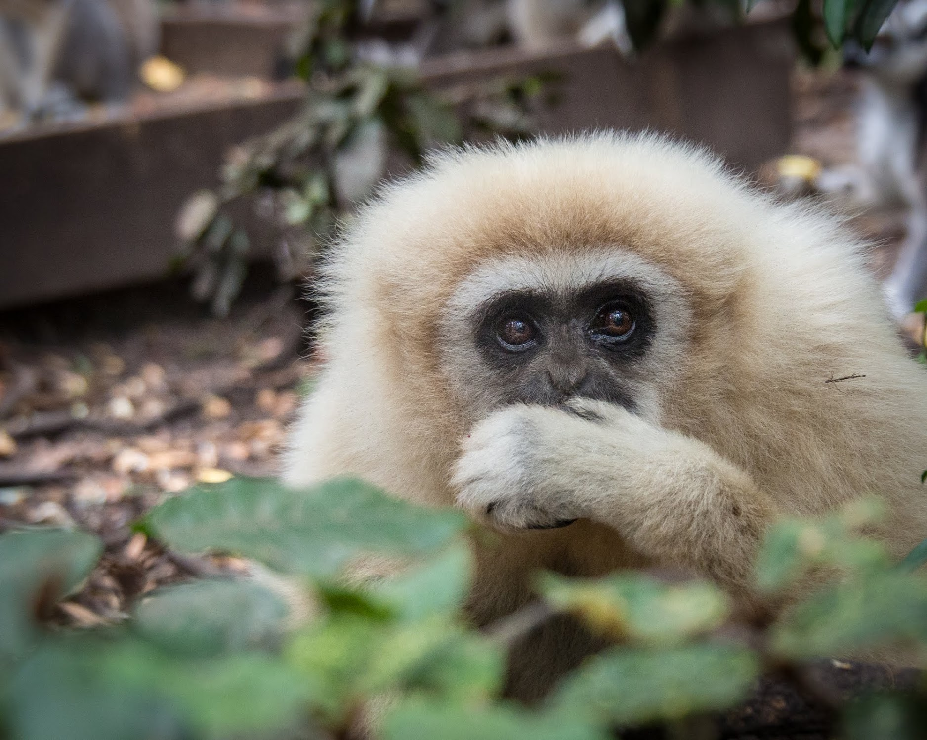 South Africa itinerary must have: Monkeyland